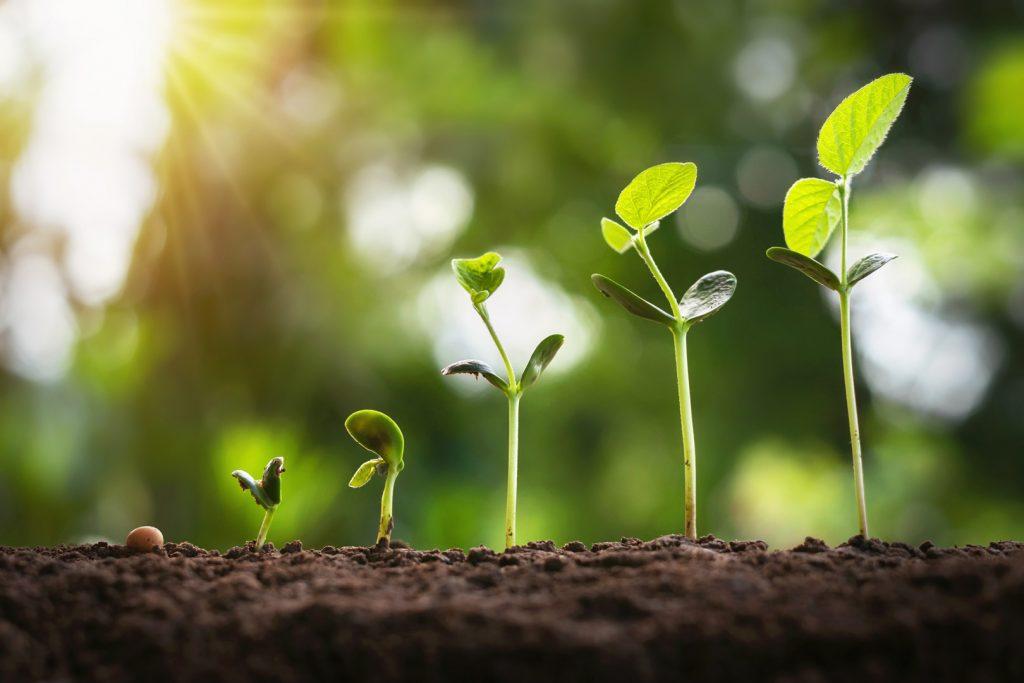 continue verbetering om groei, efficiëntie en een hoger rendement te realiseren in jouw bedrijf.